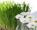 צמחי מרפא ותבלינים